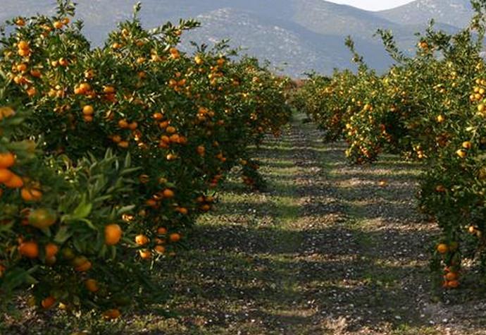 Znate li koliko košta dan branja mandarina? Oglasi šokirali sve: 'Ovo je sramotno i uvredljivo!'