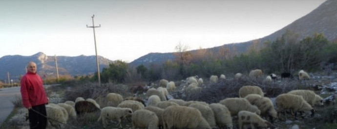 U području općina Stolac, Čitluk i Neum zabilježena bruceloza kod ovaca i koza