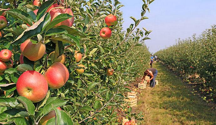 Video: EU fondovi su prilika za poljoprivrednike u BiH