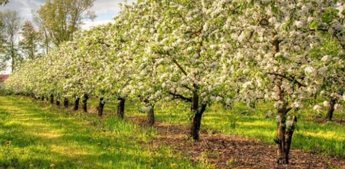 Raste izvoz šljiva, grožđa i višanja, BiH ima prepoznatljive brendove