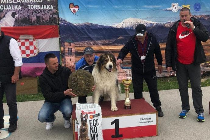 Pas Baraba najbolji tornjak u Hercegovini